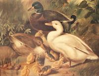 Charming Victorian Oil On Canvas Ducks & Ducklings (6 of 7)