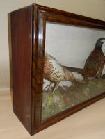 Taxidermy Pair of Pheasants c.1900 (4 of 6)