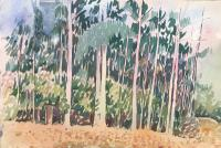 Original Large Watercolour of Trees in Australia by Ken Walch 1927-2017. Signed c.1975