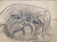 Original Pencil Drawing of a Dog by Rodrigo Moynihan R.A. 1910-1990 c.1950