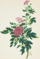 Set of Three Late 18th Century Chinese Watercolours Depicting Dahlias in Bloom