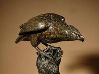 Very Decorative & Fine Bronze Model of a Hawk (14 of 19)